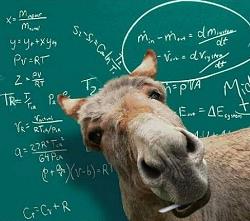 burro_1